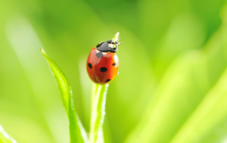 bugs-colorado-summer