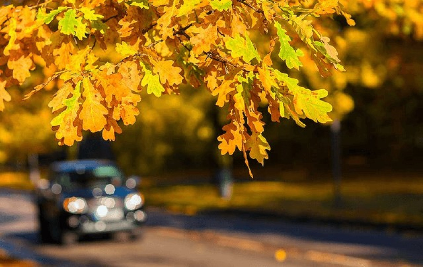 5 of the Best Places to View Leaves this Fall